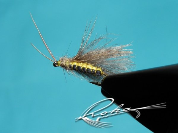 Cdc caddis.jpg