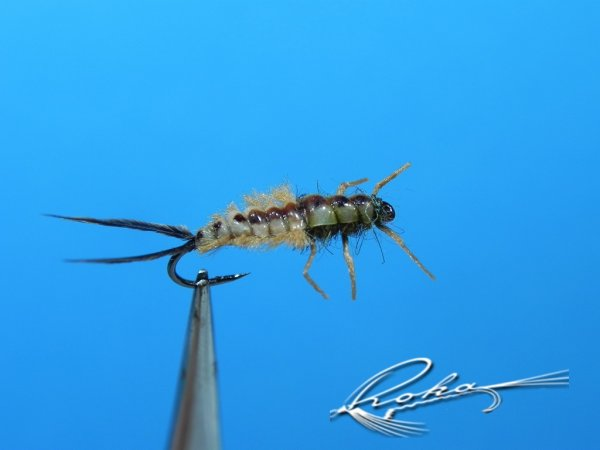 Neuroptera.jpg