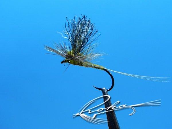 Parachute Olive.jpg